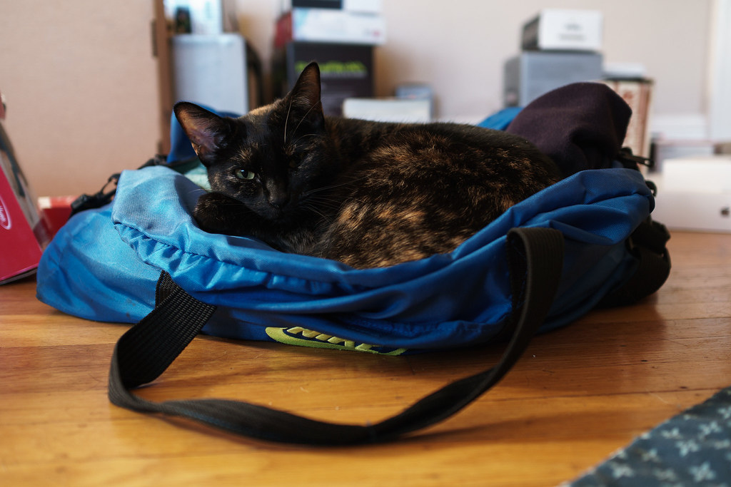 Our cat Trixie sleeps in a duffel bag in front of packed belongings in preparation for our move