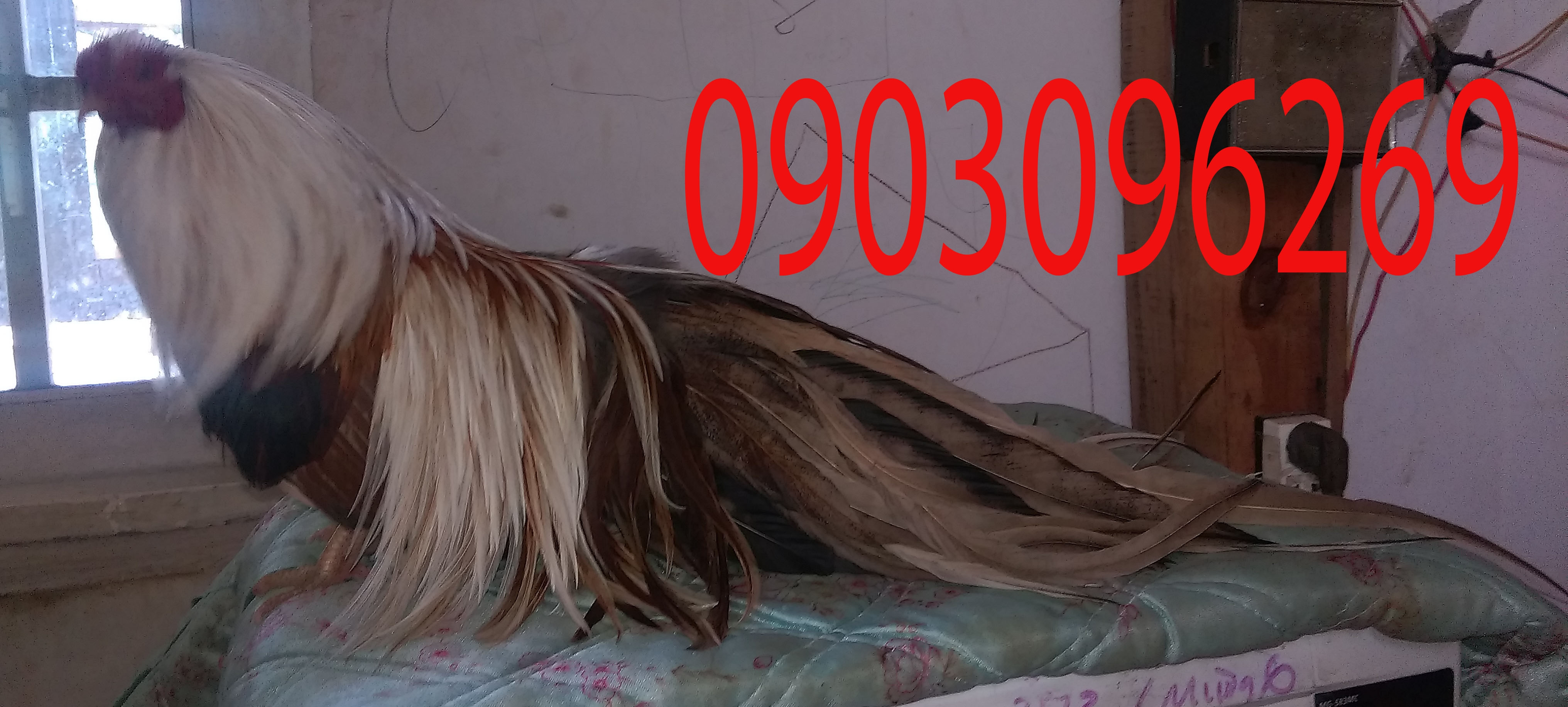 38880191450_a7eb391ac9_o.jpg