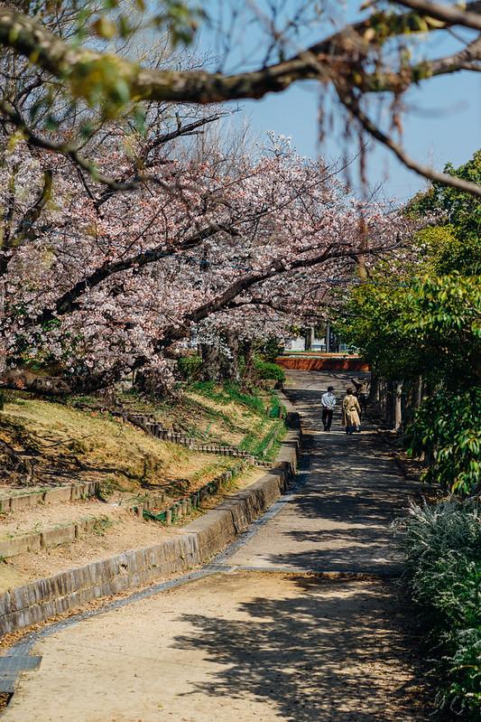 Sakura02_85mm