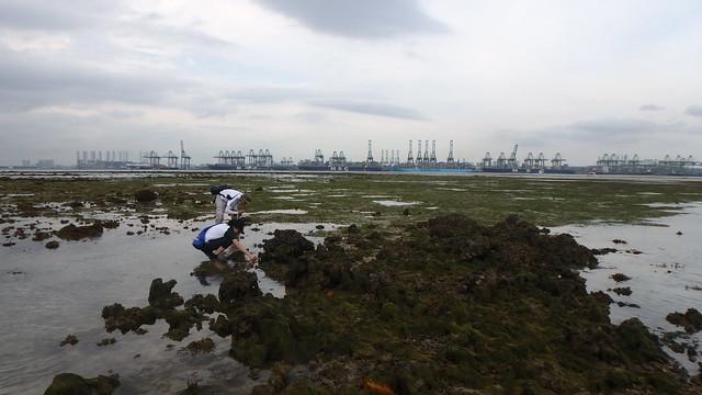 Boat strike on Cyrene Reef, Mar 2018