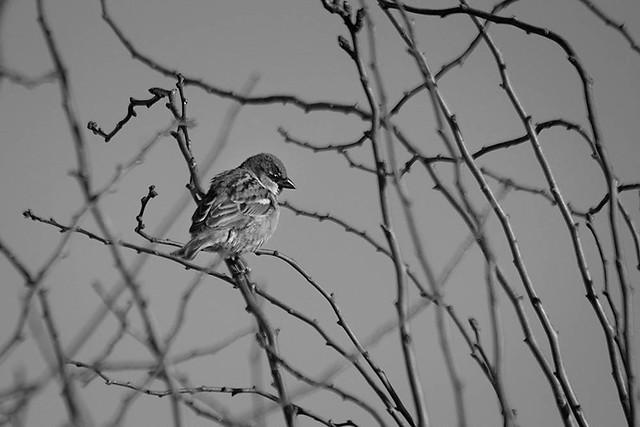 Mar 11 - A little sparrow