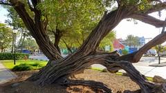 Angle - This tree is at an odd angle