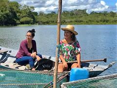 Amazonia January 2018