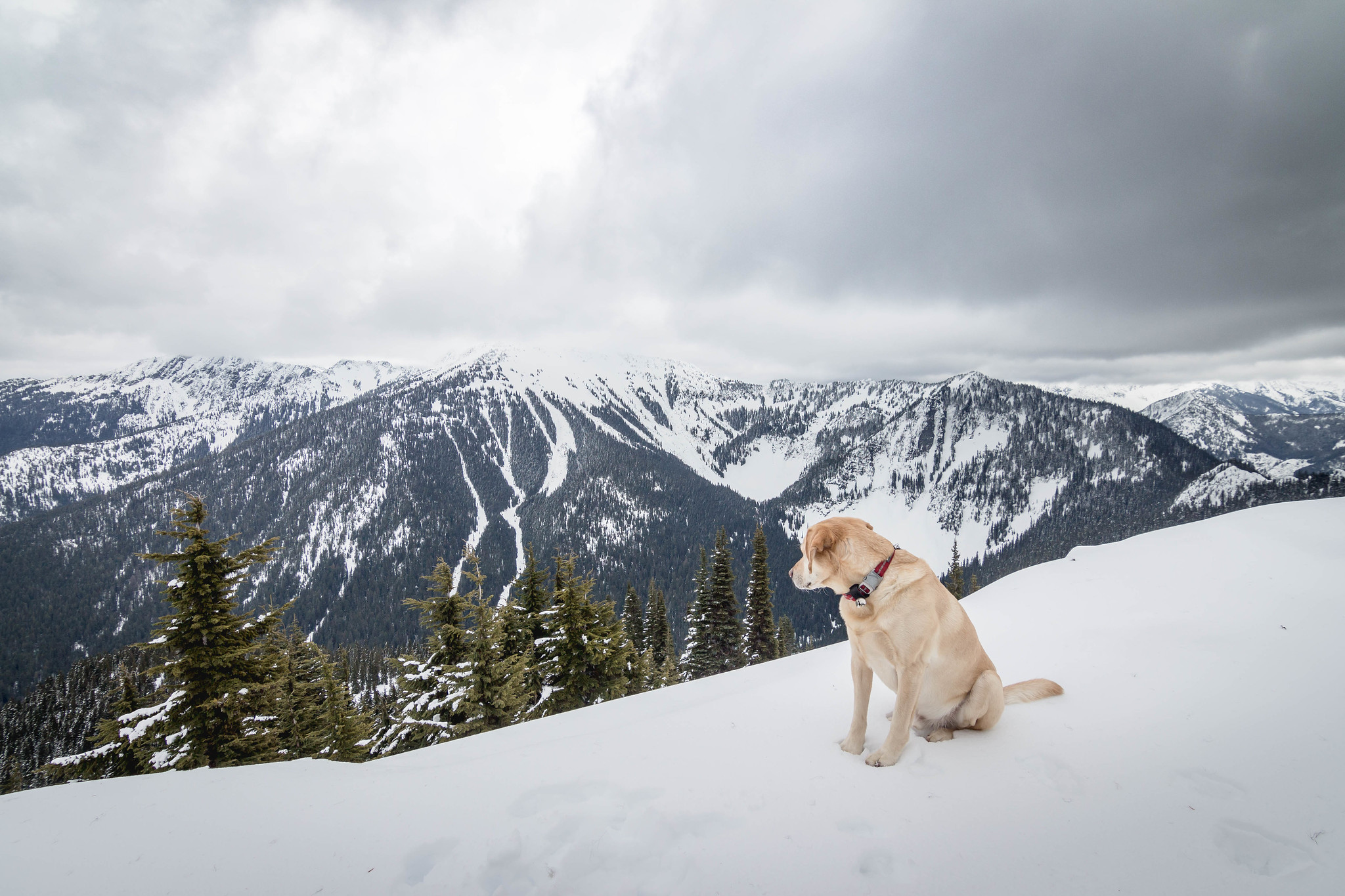 Summit dogs on Nason Ridge Peak #2