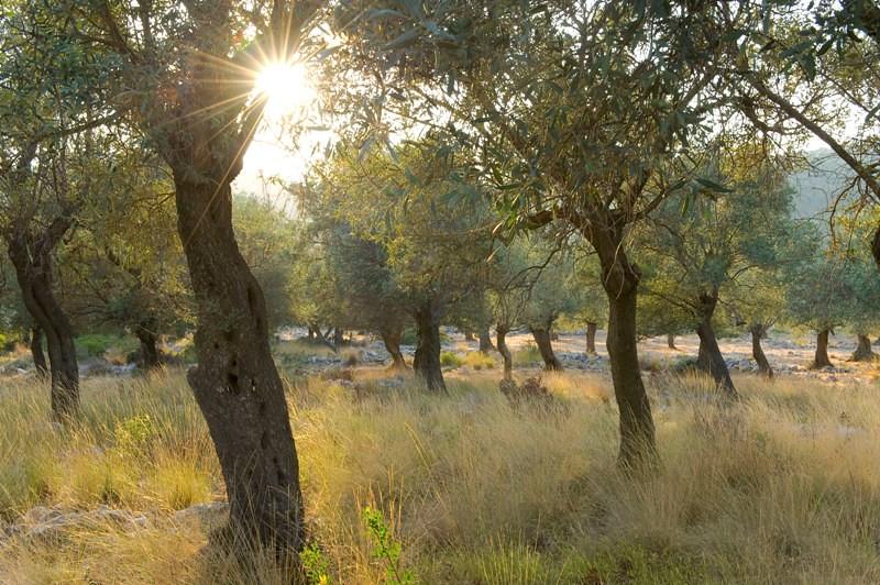 Forest, Alonissos island, Greece