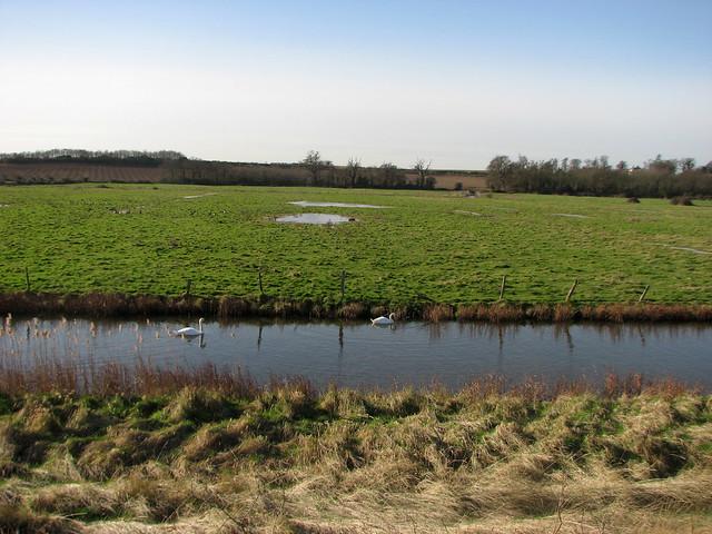 Marshes  near Shotley