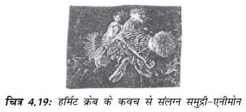 चित्र 4.19 (क) डोडर (अमरबेल) (ख) एस्केरिस