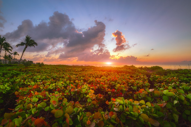 Glorious Sanibel Sunrise, Sony ILCE-7RM2, Sony FE 16-35mm F4 ZA OSS