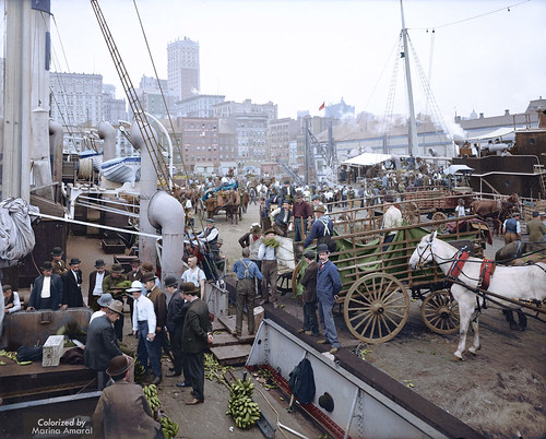 Colorized photo Banana docks, New York