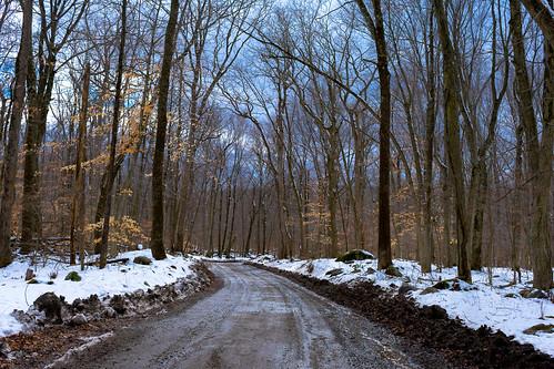 dirt road trees landscape winter snow