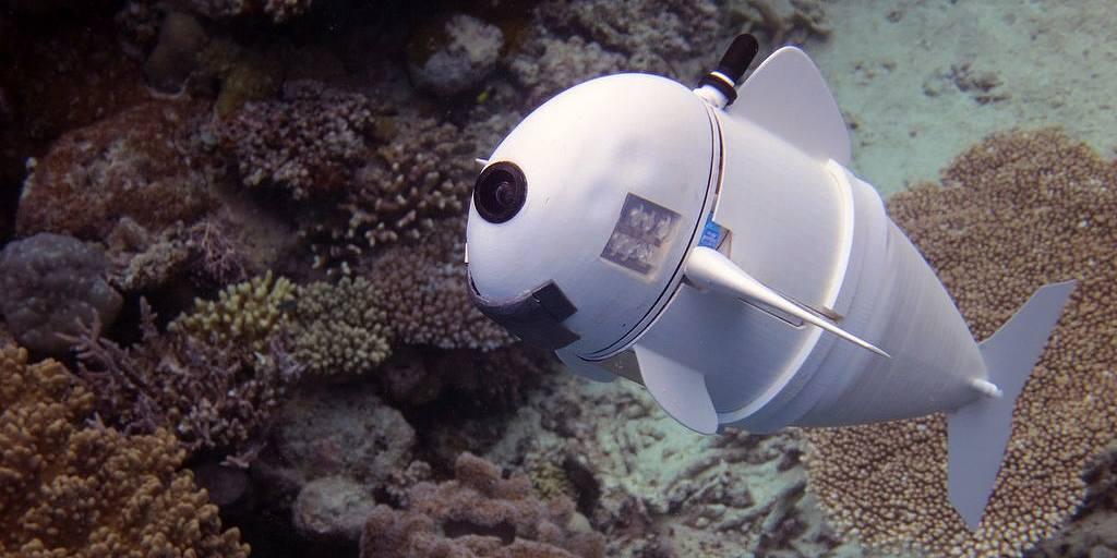 Un poisson robotique nage dans les récifs coralliens