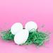 White chicken eggs on grass