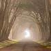 Foggy Tunnel