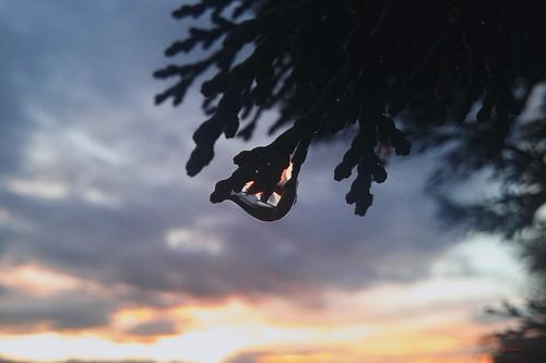 clouds sabanovicphotography edit shadow flowers nature photography sunset drops rain trees throughherlens