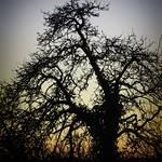 20180319-184352 - Baum & Abendrot