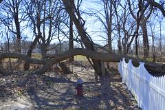 Fallen tree / archway