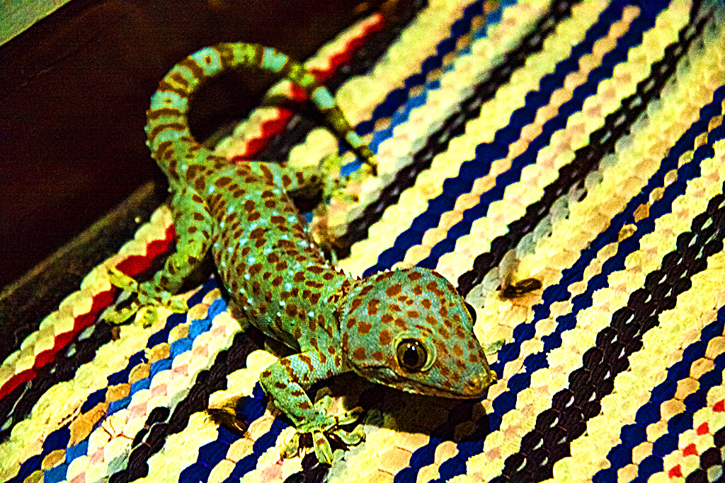 Colorful lizard--Chanthaburi