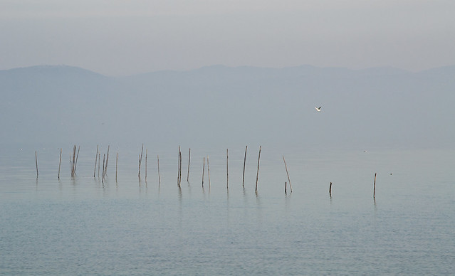 sticks in the lake, Nikon D3100, AF Zoom-Nikkor 28-200mm f/3.5-5.6G IF-ED