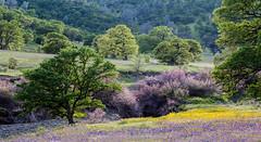 Spring-Vista_35x64
