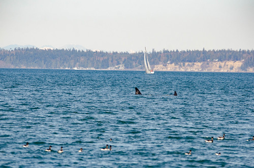 Whale Watching with Island Adventures-143