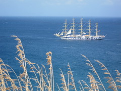 Royal Clipper and Tall Grass