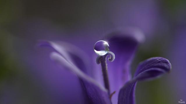 Water Drop.....