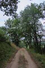 20120919 22 040 Jakobus Weg Bäume