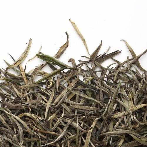Tea Studio - Nilgiri Yin Zhen