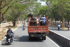 India (Mysore) Attention!! Horses on the board