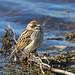 <p><a href=&quot;http://www.flickr.com/people/142574389@N08/&quot;>Dougie Edmond</a> posted a photo:</p>&#xA;&#xA;<p><a href=&quot;http://www.flickr.com/photos/142574389@N08/27113843118/&quot; title=&quot;Reed Bunting&quot;><img src=&quot;http://farm5.staticflickr.com/4782/27113843118_f564c3cdf7_m.jpg&quot; width=&quot;240&quot; height=&quot;160&quot; alt=&quot;Reed Bunting&quot; /></a></p>&#xA;&#xA;<p>Doonfoot</p>