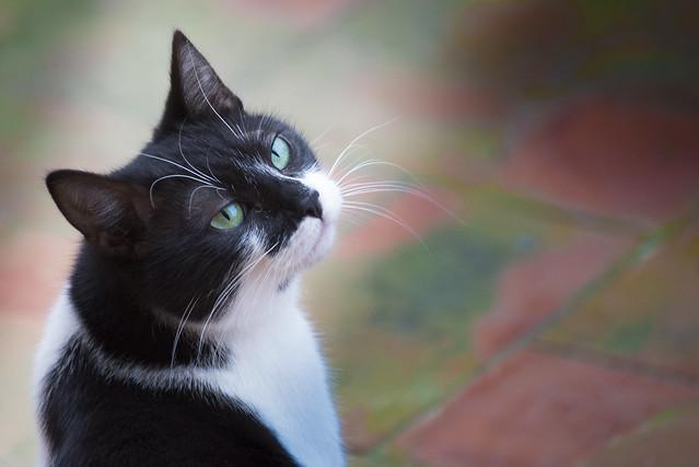 Morgana, a special kitty