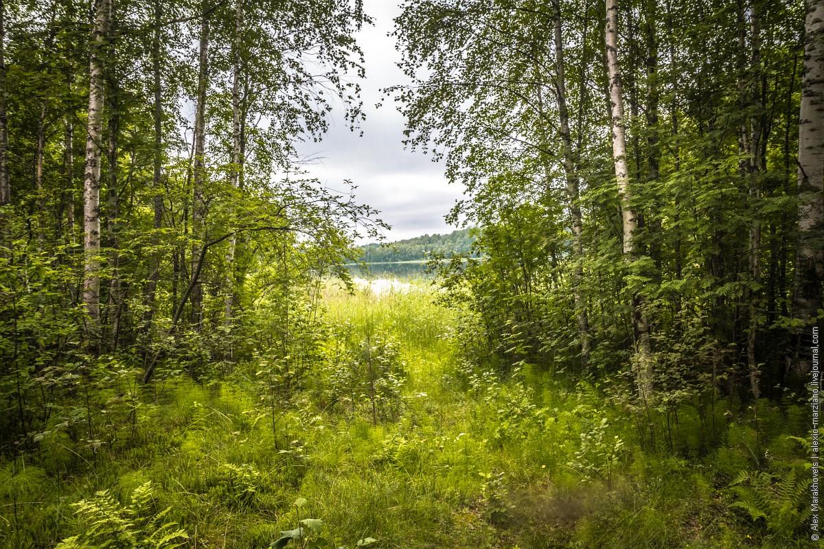 Тарасовская боровина, Кенозеро