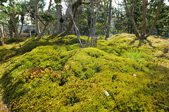 Photo:Moss (苔) By Greg Peterson in Japan
