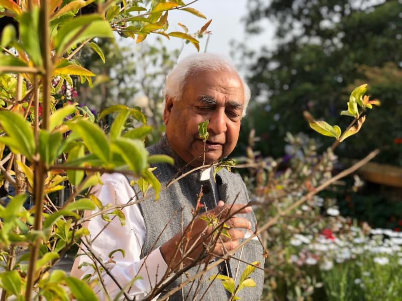 Home Sweet Home - Indira Dayal's Terrace Garden, Anand Niketan