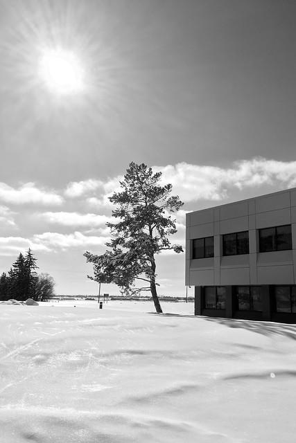Snow, Lethbridge, Alberta, Canada. By iPhone camera.