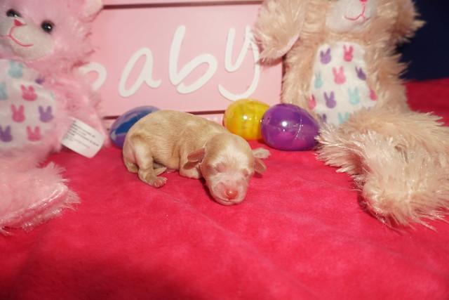 1 Anabella (darkest) 5.4oz Just born (19)