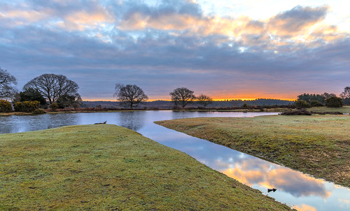 landscape newforest mogshade pond water tree sunrise cloud