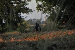 20120914 18 011 Jakobus Morgenrot Feld Bäume Pilger Gerard - Photo of Mérenvielle