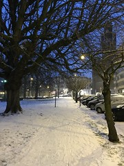 Trottoir près d'un vieux chêne sous la neige