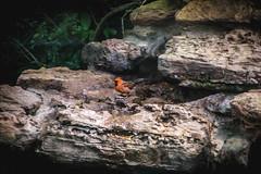 70.365.2018 Cardinal on the Rocks