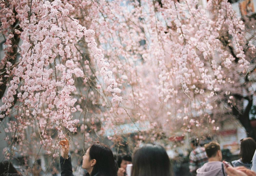 2018-03-17 上野公園桜模様 KODAK PORTRA 160 004