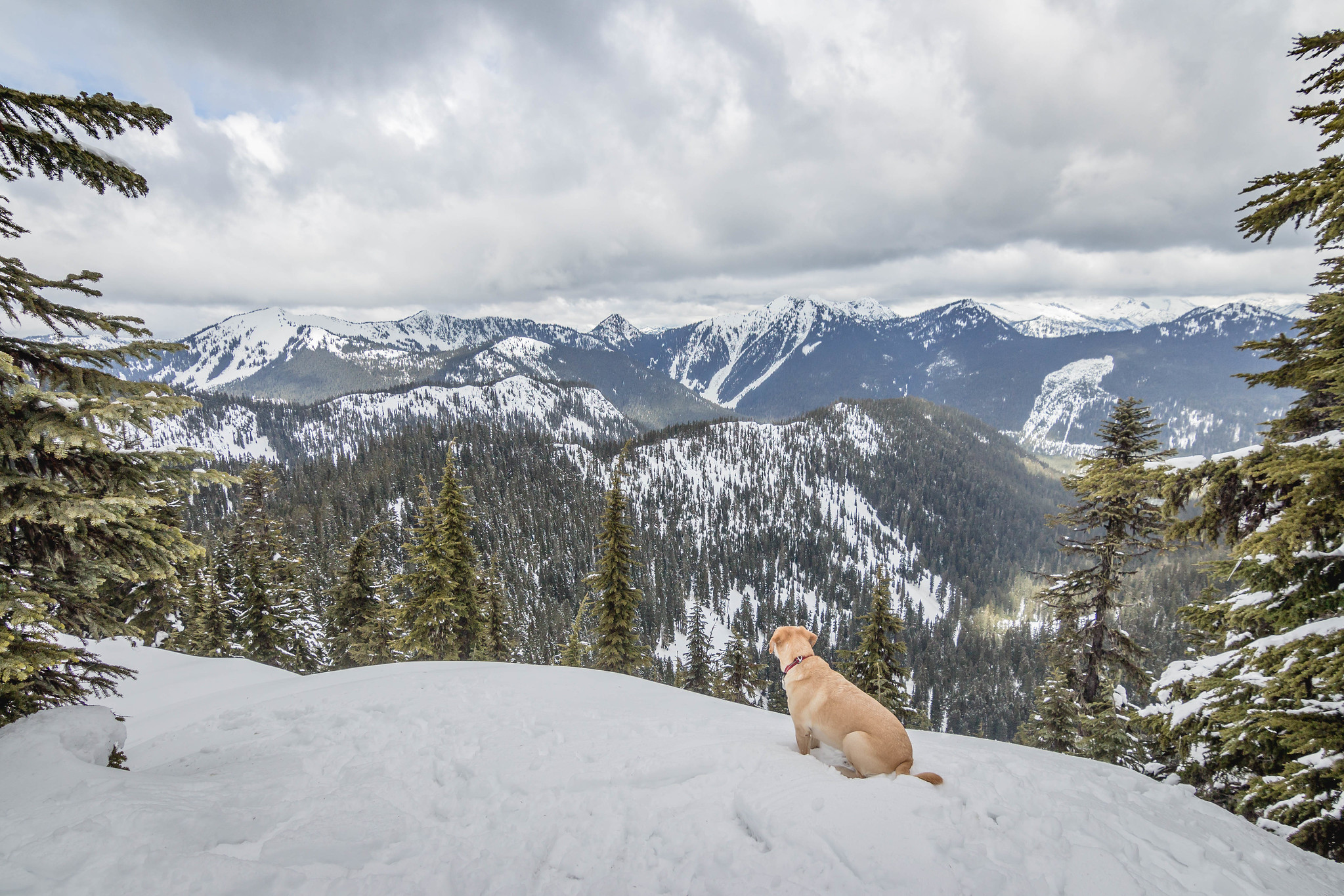 Summit dogs on Nason Ridge Peak #3