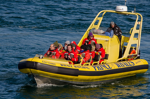 Whale Watching with Island Adventures-113