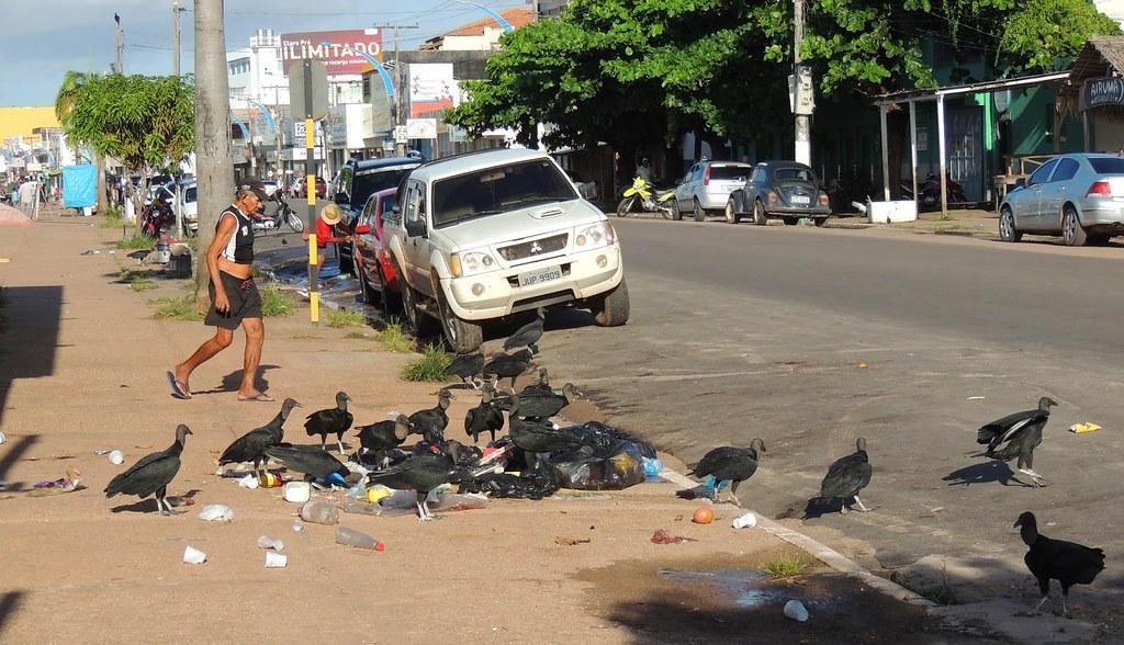 urubus em Santarém
