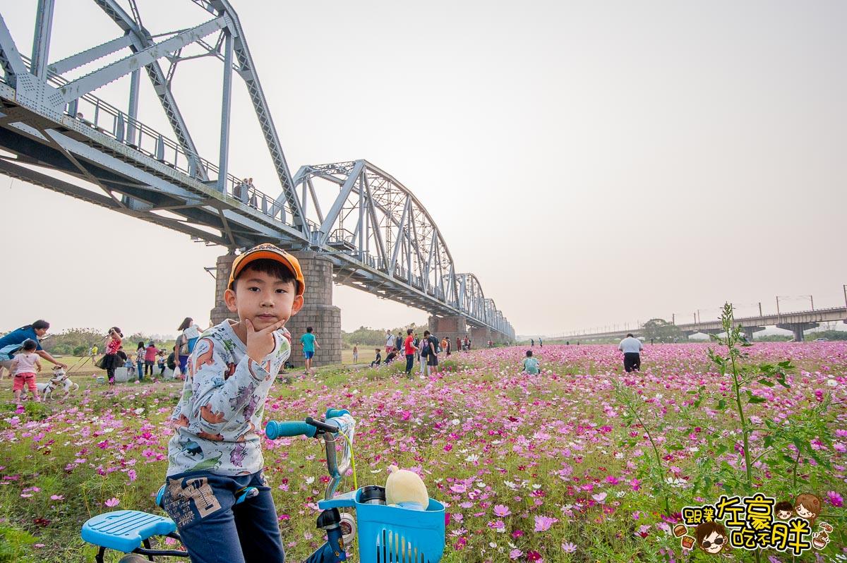 舊鐵橋(屏東端)花海-9