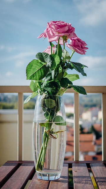 - Pink flowers -, Sony SLT-A65V, Sony DT 30mm F2.8 Macro SAM (SAL30M28)