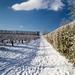 Snowy Orchard Path