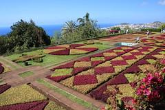 Madeira 2016 - 22.Tag, Funchal, Heimreise