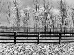 Fence and Winter Trees