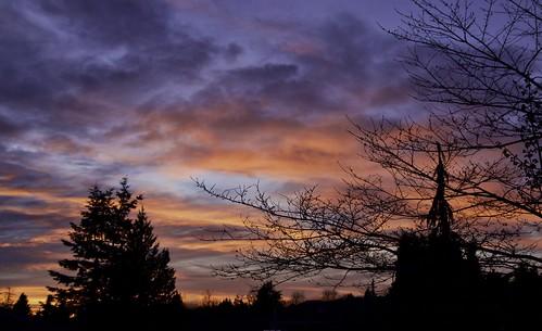 landscape nature outdoor sunset dusk tree trees sky cloud redcloud aldergrove
